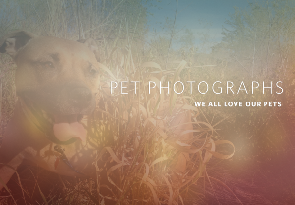Photos of Pets